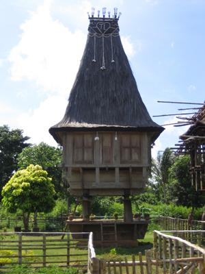 timor6